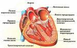 Желудочковая аритмия сердца: лечение