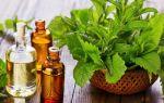 Растения при гипертонии: мята повышает или понижает давление?
