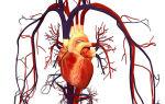 Показание артериального давления: что это такое?