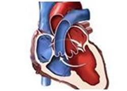 Порок сердца при беременности у плода на узи: что делать?