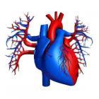 Воздействие тяжелых патологий на сердечно-сосудистую систему